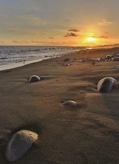 ONLINE: Reunion - Havaj Indického oceánu -Kolem Světa, stream, Online