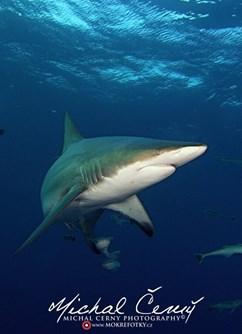 ONLINE: JAR - Kruger park a potápění se žraloky (M. Černý) -Kolem Světa, stream, Online
