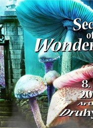 Secret of the Wonderworker VII. - psychedelic masked party