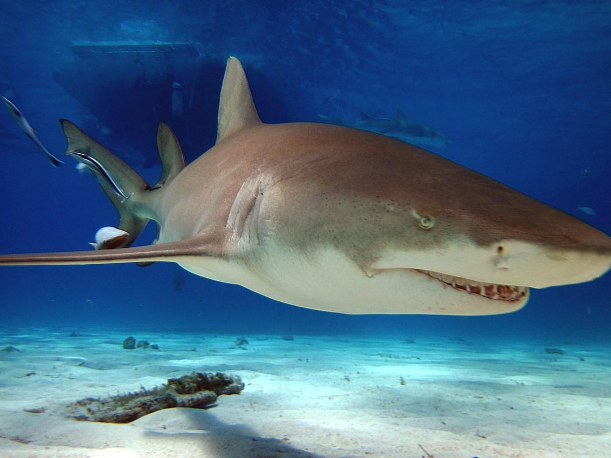 Shark tale - mýty a příběhy o žralocích (Daniela Koteková)