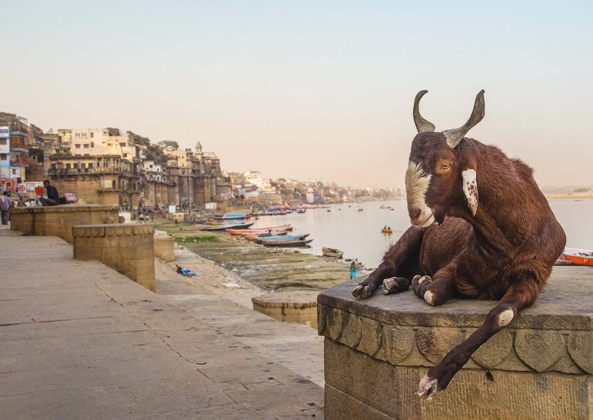Indie: Těžko uvěřitelná země (Blansko)