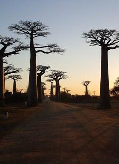 Madagaskar - Země krále Jelimána I Havířov