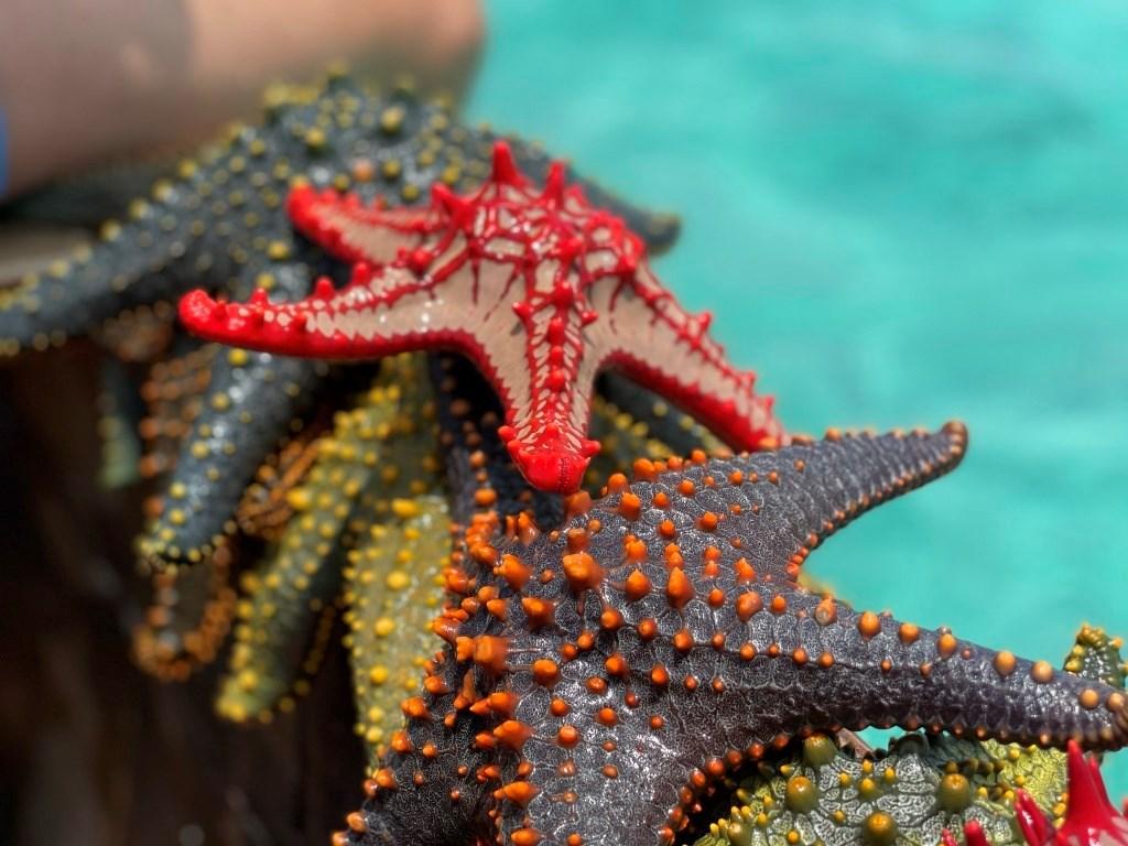 ONLINE PRO DĚTI: Moře a oceány