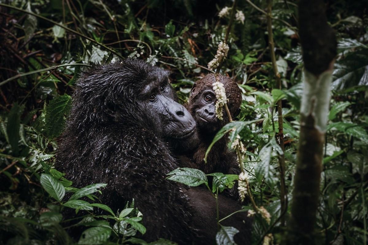 ONLINE: Uganda – zelená perla Afriky (Jana Kupčáková)